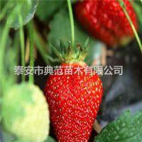颊丰草莓苗价格 颊丰草莓苗 品种介绍产地供应