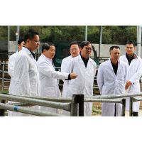 广西优质西门塔尔黄牛示范园屠宰供给销售认养