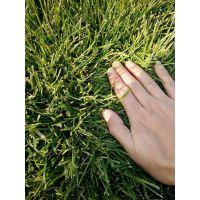 出售草坪卷
