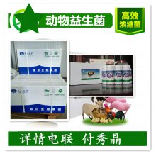 蛋禽枯草芽孢杆菌复合菌饲料添加剂