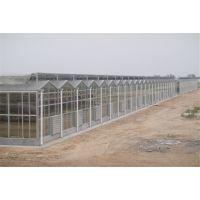 辽宁玻璃温室大棚4米高、纹络智能型工程建造公司