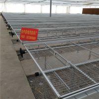 热镀锌苗床网出售 网格均匀苗床 整洁大方 厂家提供安装