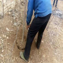 手提高性能挖树机 德国合资链条挖树机 润众