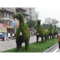 新园五色草立体造型-骆驼002