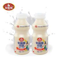 乳酸菌饮料350ml批发代理招商加盟1*12瓶厂家直销