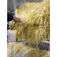 云南昆明大型豆芽生产线设备厂家