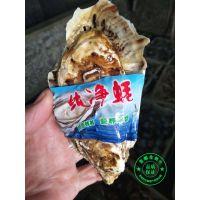 吉蛎生蚝价格 金给利生鲜牡蛎价格