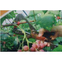 家用多功能捆扎机 植物新型绑枝机 蔬菜小型绑枝机 电动绑枝机