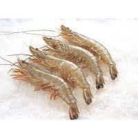 天津冷冻南美对虾价格 冰鲜对虾货源