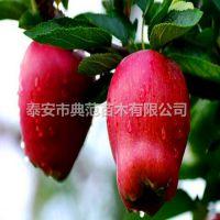 花牛苹果苗价格 花牛苹果树苗产地批发 品种介绍