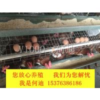 鸡蛋壳颜色不好看有白皮蛋怎么办 微尔生物