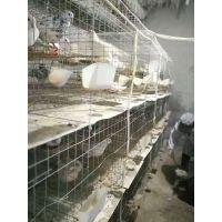 3层12位铁丝鸽笼 200*55*150鸽子笼 适用大型养鸽场