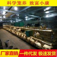 兔笼厂批发三层十二位兔子养殖笼商品兔笼育肥小兔笼加粗型兔笼