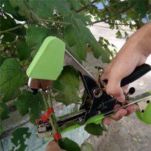 固定爬秧作物番茄高产量绑枝机