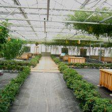供应河南/山东/湖北生态餐厅温室设计建造