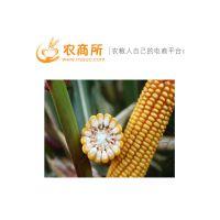 长沙市今日玉米价格行情走势农商所 长沙市玉米价格今日行情分析