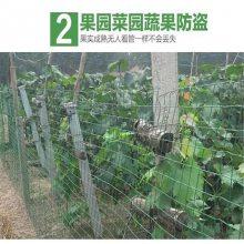 绿色围栏铁丝网 养殖铁丝网厂家 养鸡围网