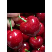 早大果樱桃苗多少钱一颗 早大果樱桃苗种植方法