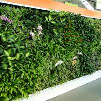 东莞紫萱工艺品原著仿真厂家促销仿真植物墙 室内植物墙批发 园林景观
