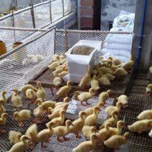 肉鸭用料桶散养鸡用料槽塑料料箱