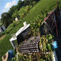 科大江苏水葫芦打捞船 水花生收集船 水葫芦收割机器