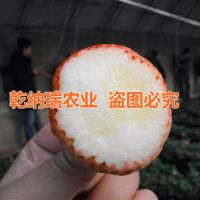 乾纳瑞农业科技(在线咨询),嘉兴白草莓苗,白草莓苗种苗