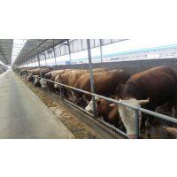 江苏有西门塔尔牛养殖场吗西门塔尔价格