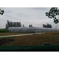 湖北咸宁蘑菇香菇繁育大棚温室3米高、薄膜2MM骨架型施工厂家