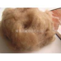 供应优质水洗脱脂丝光羊毛,细质羊毛,驼毛驼绒用于高档被服絮片
