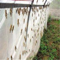 厂家现货供应各种蚂蚱网25目加厚抗老化结实耐用支持定制各种尺寸