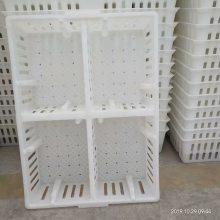 厂家直销鸡苗周转箱塑料鸡苗箱小鸡周转筐价格