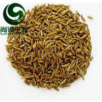 芹菜籽提取物 芹菜籽粉 尚诚生物