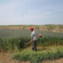 优质汽油果园松土割草机 农用汽油背负式除杂机 植保机械
