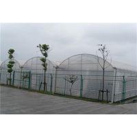 山东蔬菜采摘育苗多功能大棚温室5万平、PO膜连栋型项目造价