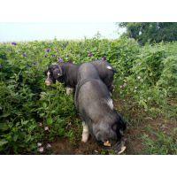 宁乡优良猪肉肉质鲜美厂家销售