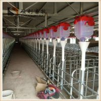 猪场喂食设备母猪定位栏喂料线提高母猪生产效率降低工人劳动强度节省饲料