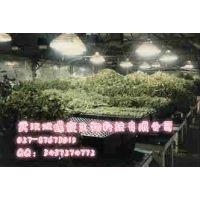 人工光植物工厂建设 大型植物工厂 小型植物工厂