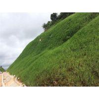 云南文山州提供优质边坡防水土流失方案