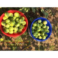 黄金百香果多少钱一斤 广西黄金百香果种苗哪里有卖