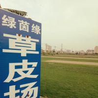 深圳市龙岗区坂田绿茵缘草皮园艺场