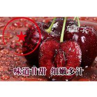 车厘子樱桃是哪个品种 泰安瑞康苗木供应美国车厘子宾莹