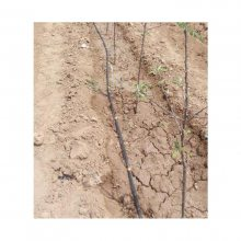 果树灌溉用稳流器滴头 压力补偿滴头 8孔滴头厂家