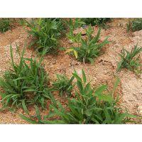 云南省玉溪市边坡常用防护草籽全国