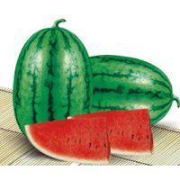 【新疆农乐农业】买西瓜种子就来这
