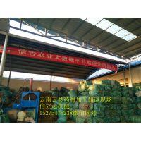 鸿运YD-10西南地区指定中药材打包机供货服务商