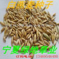 批发牧草种子【白燕麦种子】耐寒耐旱 牛羊饲料 量大从优