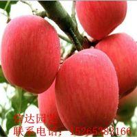 山东烟富8号苹果苗种类繁多 专业草莓苗批发零售 泰安信达园艺场