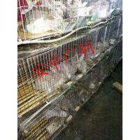 出售兔笼 兔子笼 3层9位/12位商品兔笼 字母兔笼 幼兔笼 种兔笼 全套配件批发