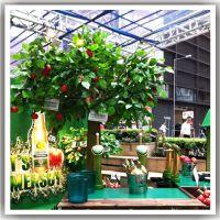 玻璃钢仿真苹果树 商场展会摆放假树 供应假果树