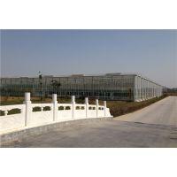 安徽安庆无土栽培玻璃大棚温室种植园高度4.5米、东西开跨型承建公司